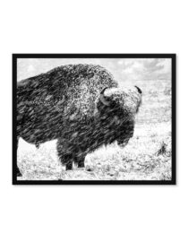 Premium Framed Photo Prints of a black and white picture from goodprints