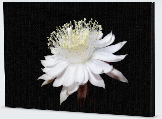 canvas flower print