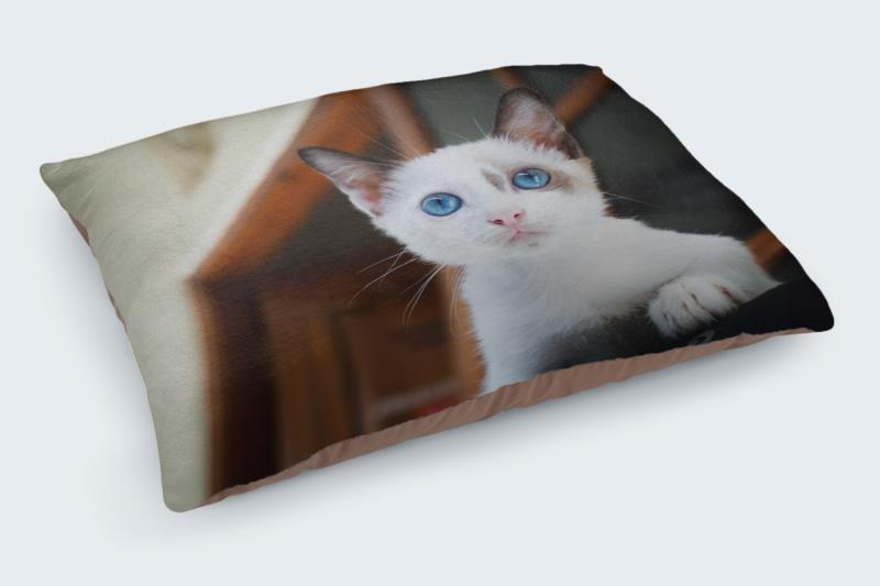 25 Cute Cat Pictures 1