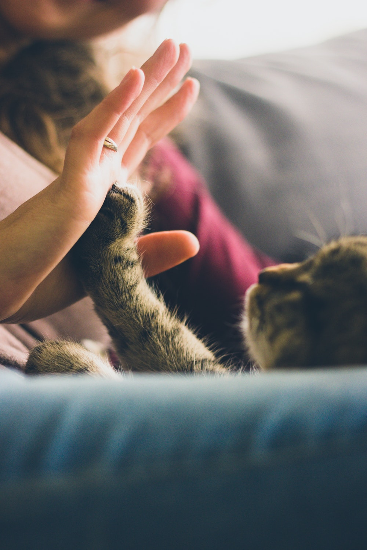 high five cat