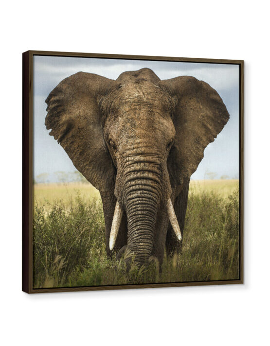 Framed Photo Canvas Print with an elephant picture from Goodprints