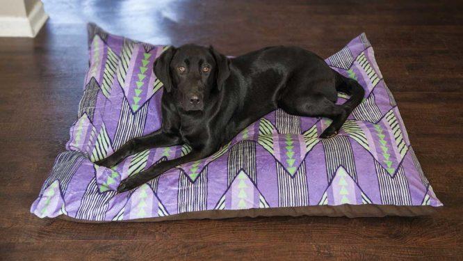 Coming Soon! Custom Indoor and Outdoor Photo Pet Beds 3