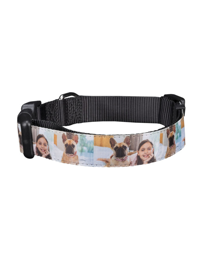 personalized photo pet collar large