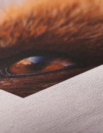 Fine Art Canvas - Custom Order Only 2